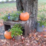 Fall Pumpkin Foliage
