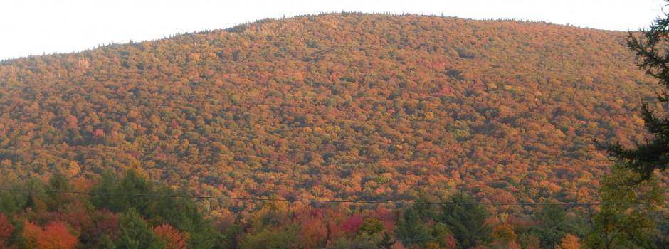 Foliage_Vermont