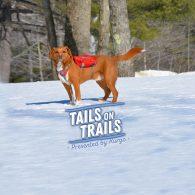 promo-img-event-tails-on-trails-v3